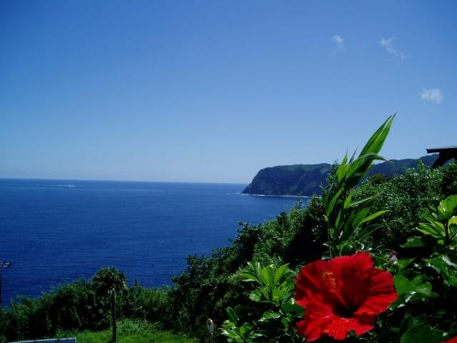 八丈島の海とハイビスカス